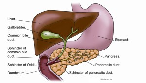 biliary inflammation