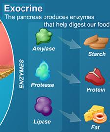 Exocrine Pancreatic Insufficiency Beating Pancreatitis